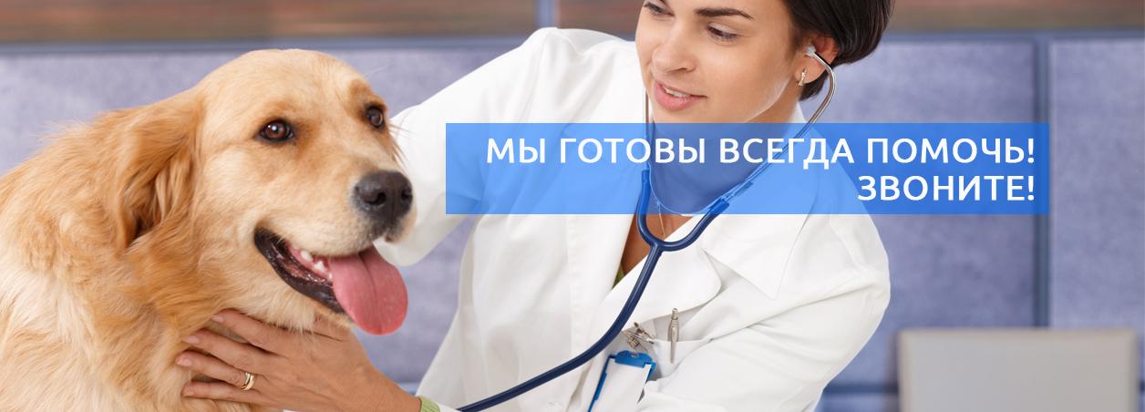 Ветеринарный врач на дом podolsk